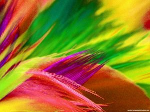 colorful-feather-background-powerpoint