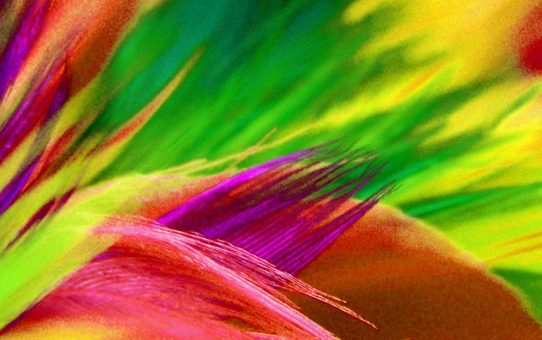 Colorful Feather Background Powerpoint